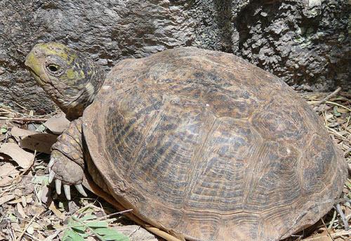 Desert turtle box