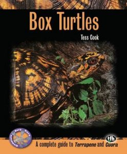 box turtles by tess cook